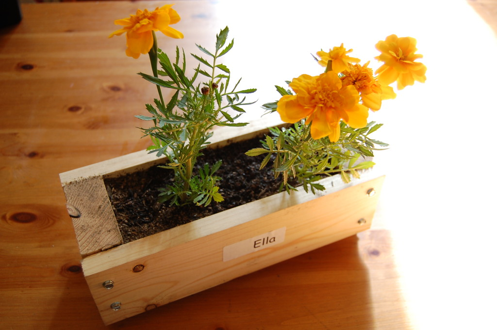 Ella made this wood box at school and planted the flowers too!